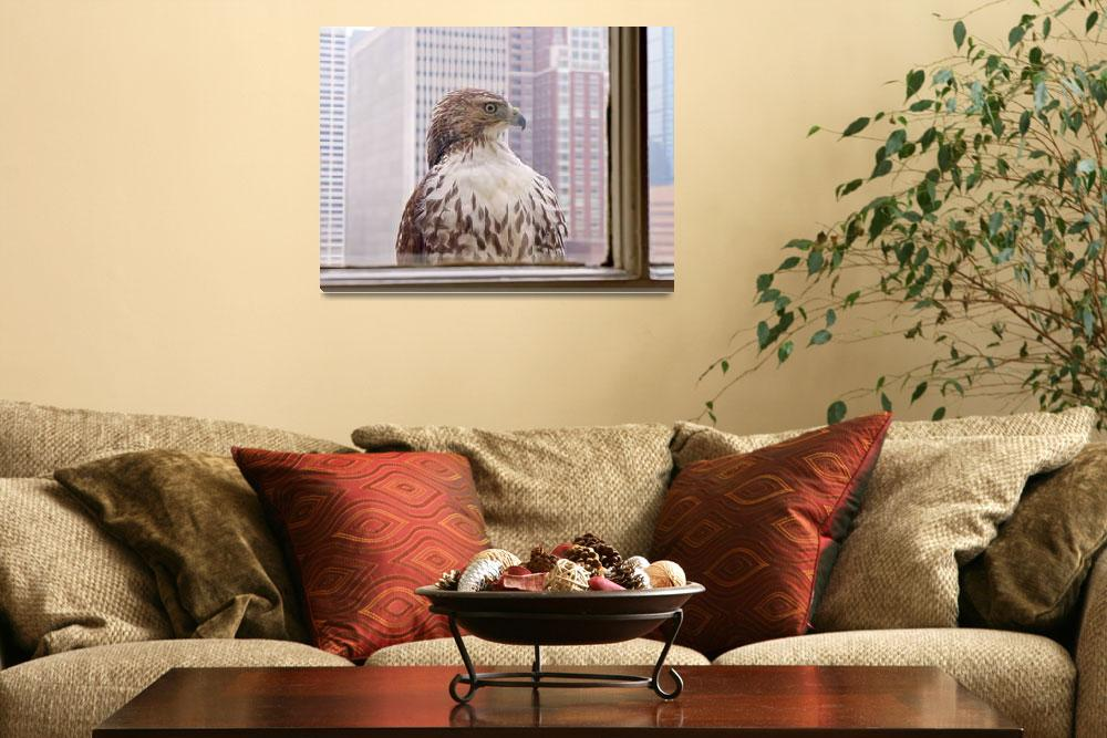 """Urban Red-tailed Hawk&quot  (2013) by RonaBlack"