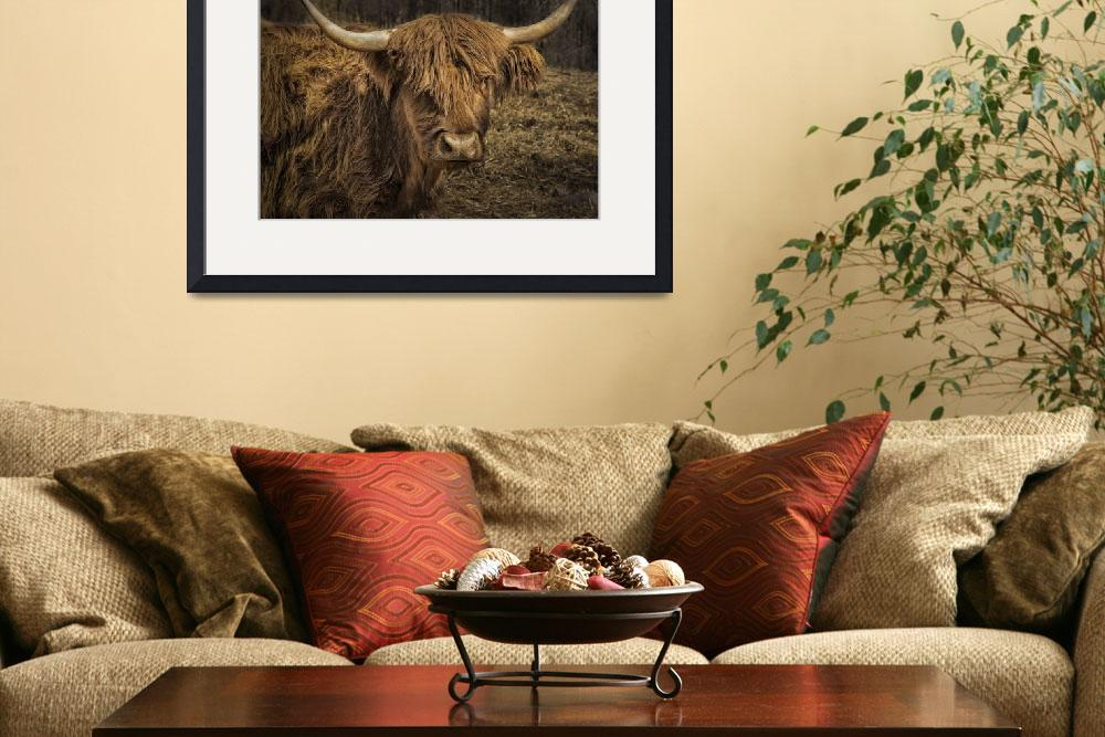 """Scottish Highland Cattle&quot  (2016) by WilshireImages"