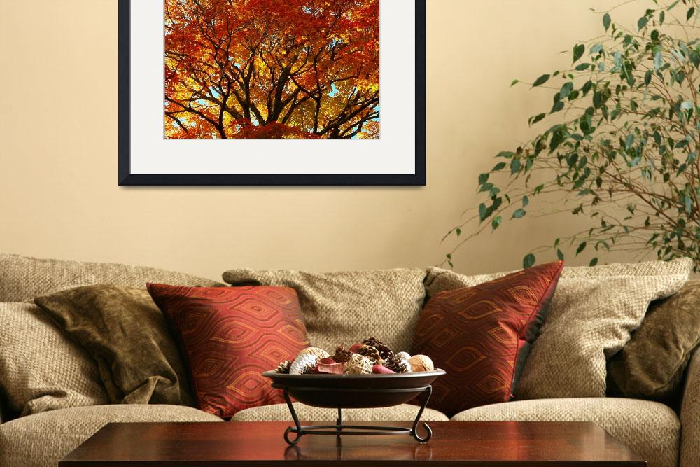 """Autumn Maple Tree Westboro MA&quot  (2012) by bavosiphotoart"