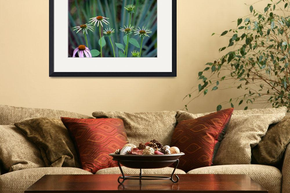 """Coneflowers in Garden&quot  (2014) by KsWorldArt"