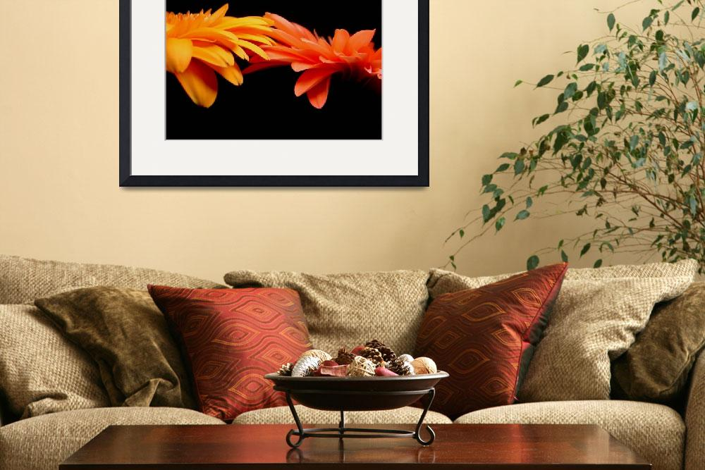 """Red & Orange Gerbera Daisies Blaze&quot  (2006) by Infomages"