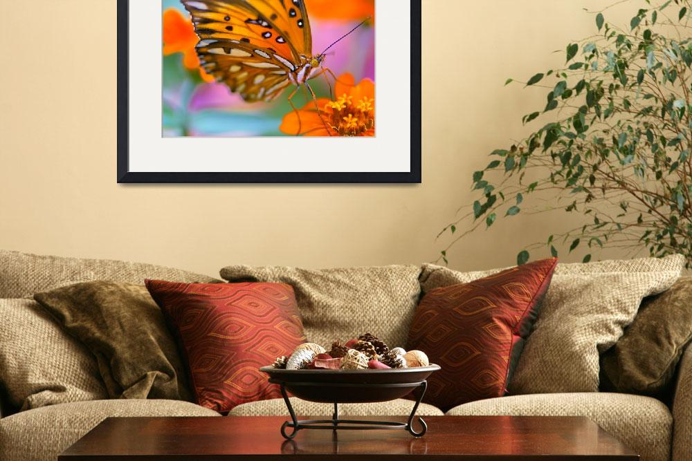 """Morning Butterfly 16x16&quot  by JoelOlives"