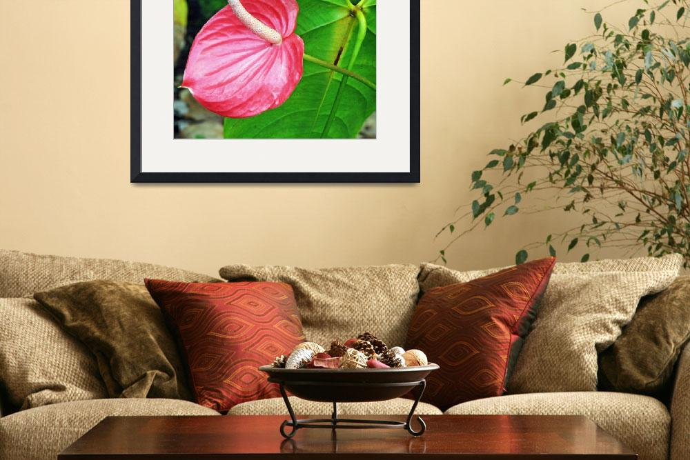 """Anthurium&quot  (2006) by JodyKenny"