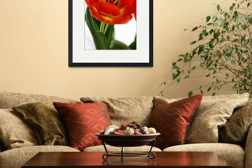 """red tulip&quot  by lauracrowmiller"