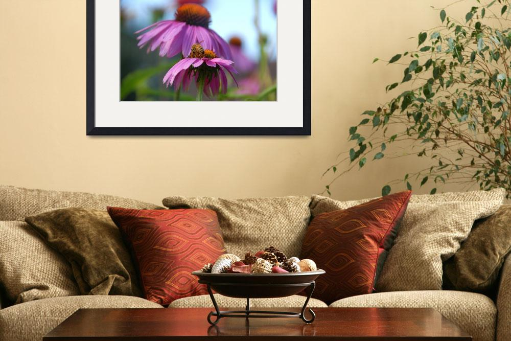 """Honeybee On Echinacea&quot  (2009) by craglynn"