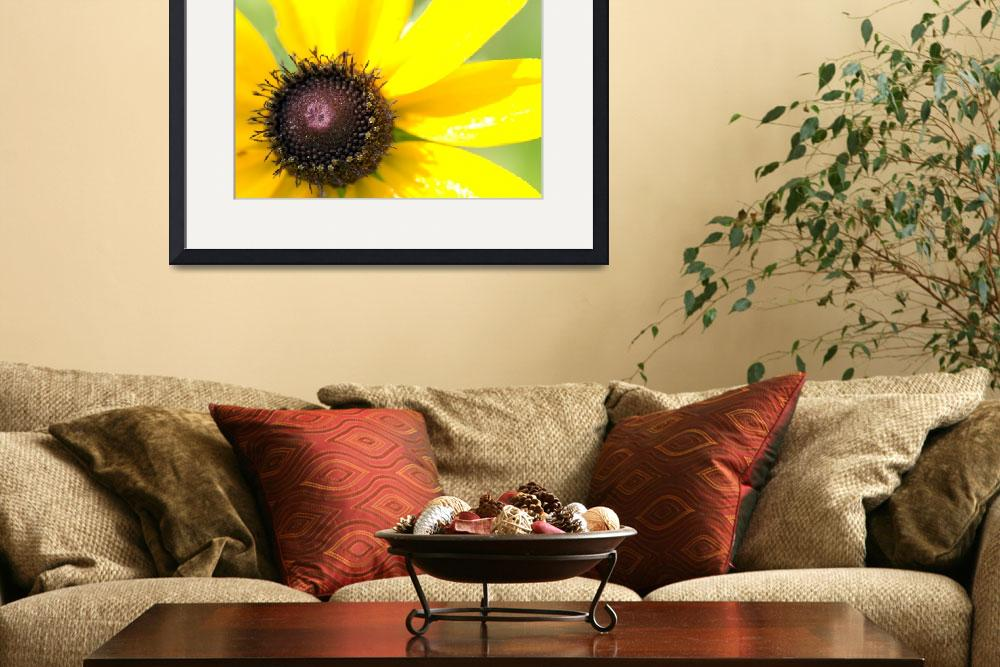 """Black Eyed Susan&quot  (2008) by liquidtree"