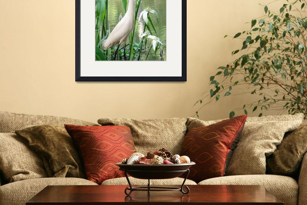 """White Egret in Brooker Creek&quot  (2011) by spadecaller"