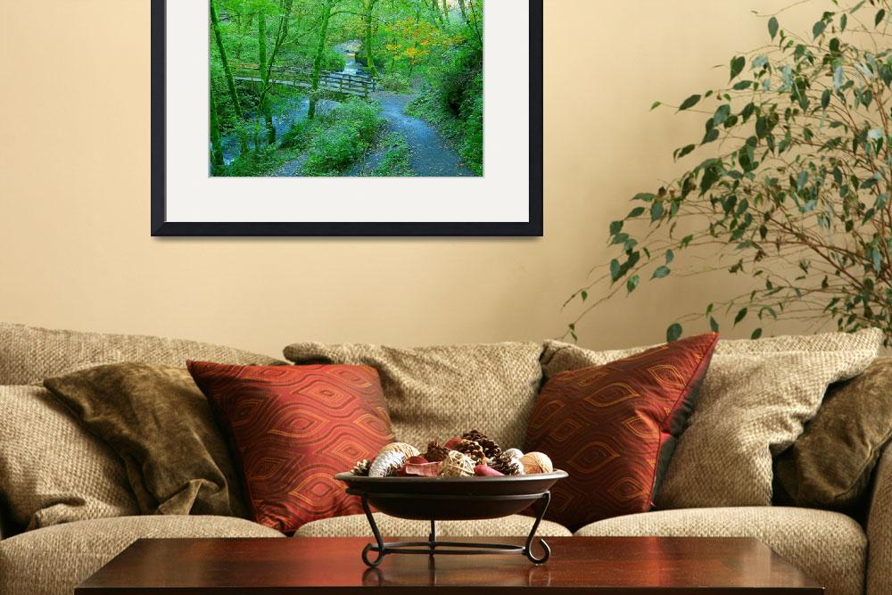 """Over The Winding Creek Through The Lush Forest&quot  by artsandi"