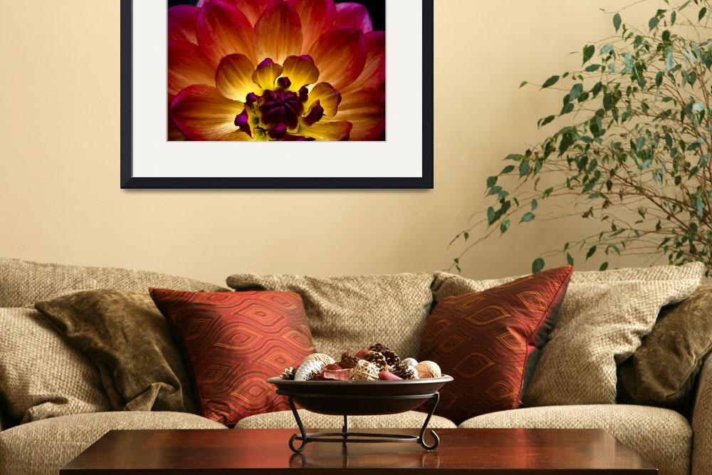 """Exquisite Dahlia&quot  (2010) by SoulfulPhotos"