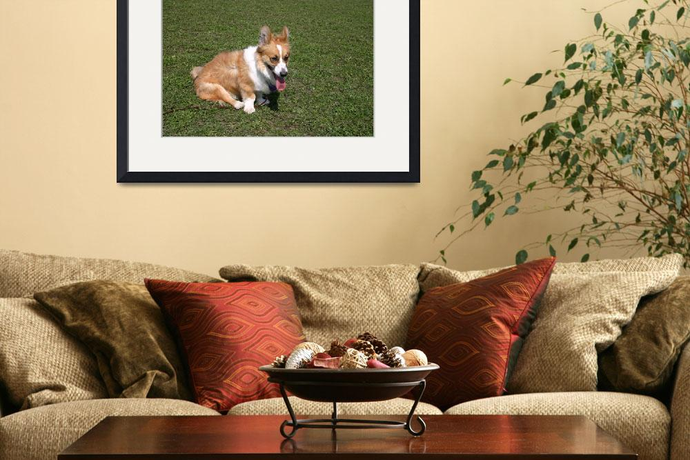 """Sitting Cardigan Welsh Corgi&quot  by welshcorgi"
