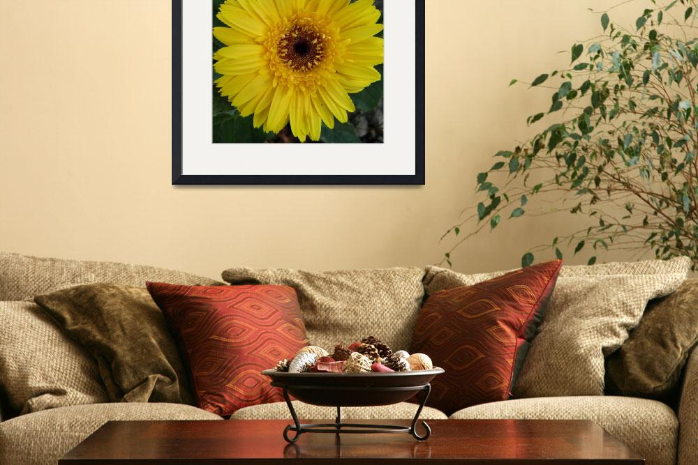 """yellow flower 2&quot  (2010) by sb1photography"