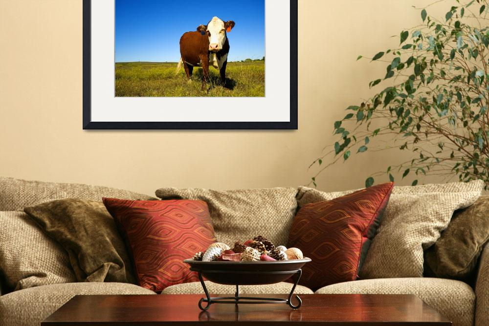 """Cow Portrait&quot  (2009) by lorieleighlawrence"