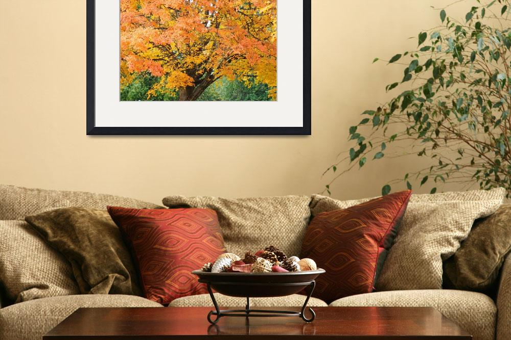"""Big Autumn Tree in Park Orange Yellow Leaves&quot  (2014) by BasleeTroutman"