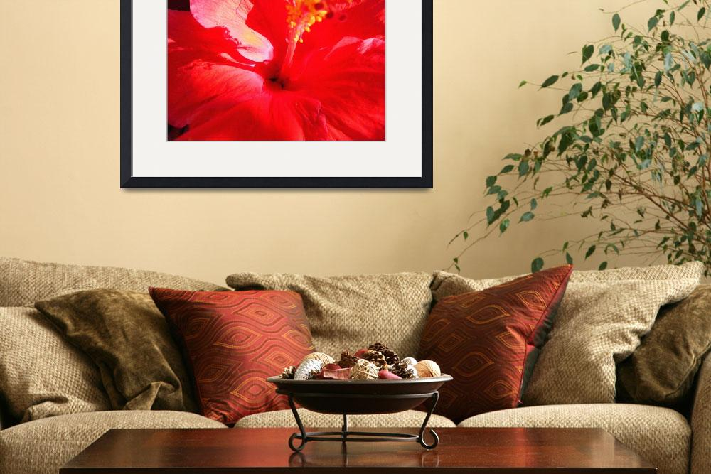 """Red Hibiscus&quot  (2010) by paulyworksfineart"
