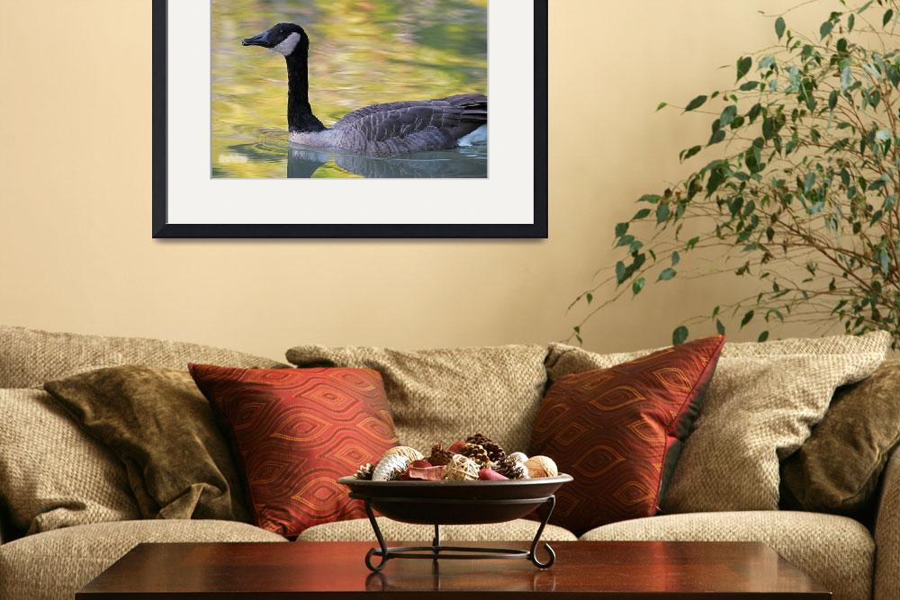 """Canada Goose on Autumn Lake&quot  (2008) by Dreambarks"