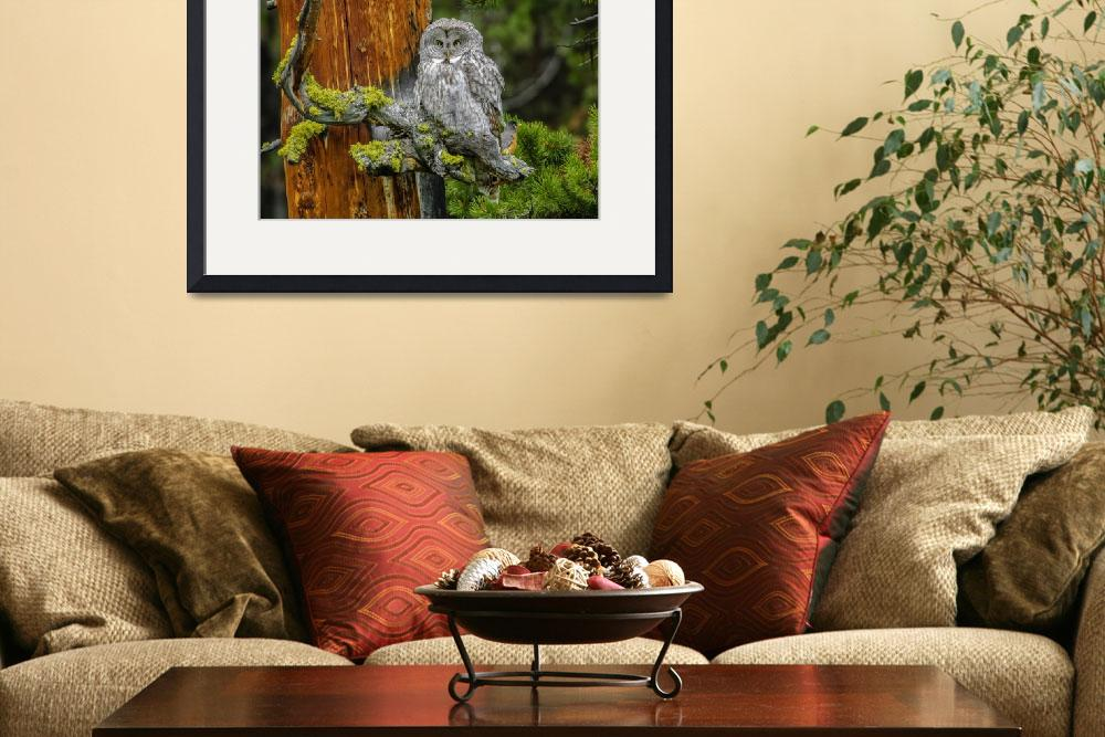 """Great Gray Owl & Robin&quot  by PronghornPix"