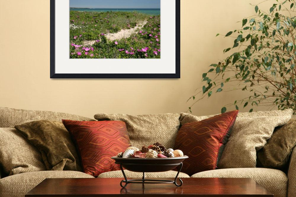 """Beach Path through Rosa Rugosa&quot  by brucetopher"