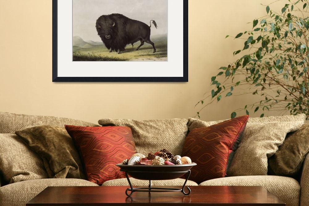 """Buffalo by George Catlin&quot  (1910) by limitededitionvintage"
