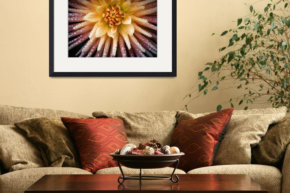 """Presence Dahlia&quot  (2010) by SoulfulPhotos"