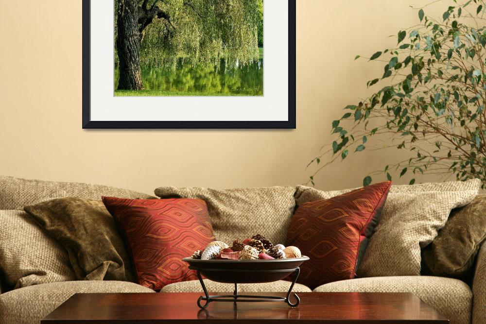 """Weeping Willow Tree and Pond&quot  (2011) by PhotographsByCarolFAustin"