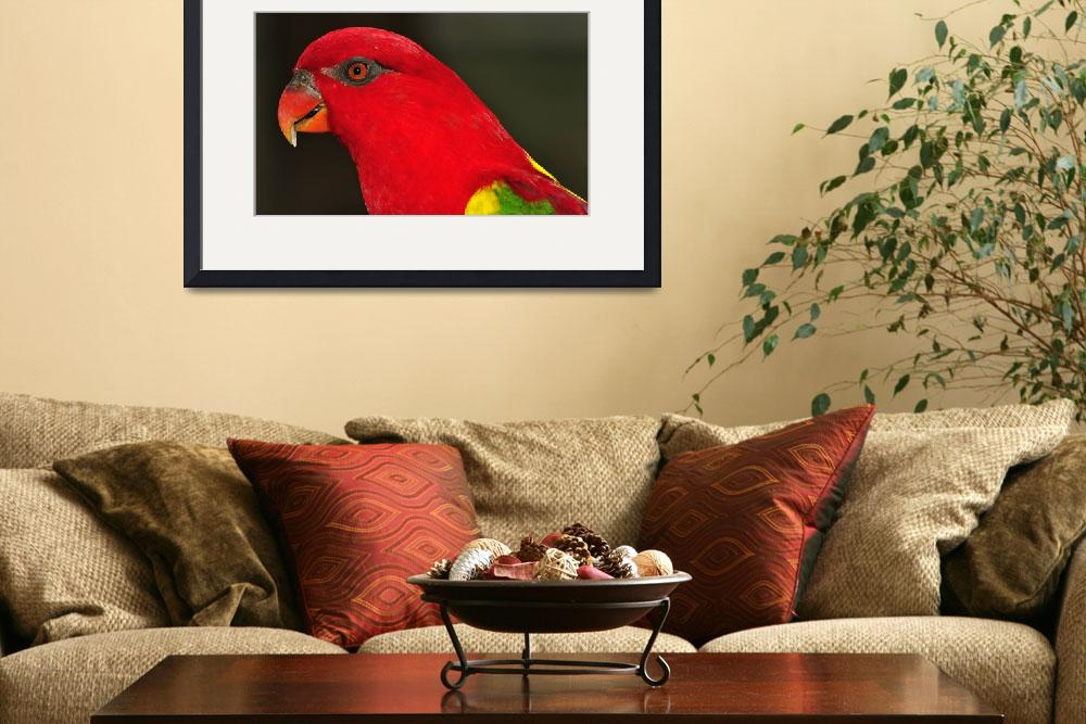 """Red Headed Parrot&quot  (2013) by JoaoPonces"