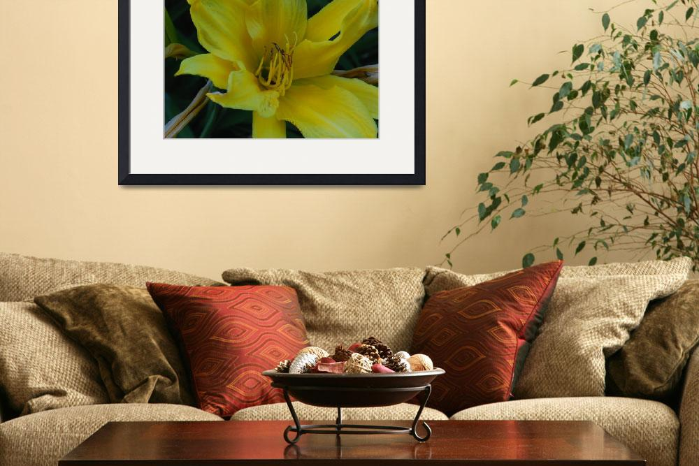 """Yellow Lily&quot  (2008) by elricksphoto"