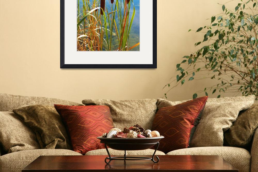 """Wildflower - Typha Latifolia Flower&quot  by artsandi"