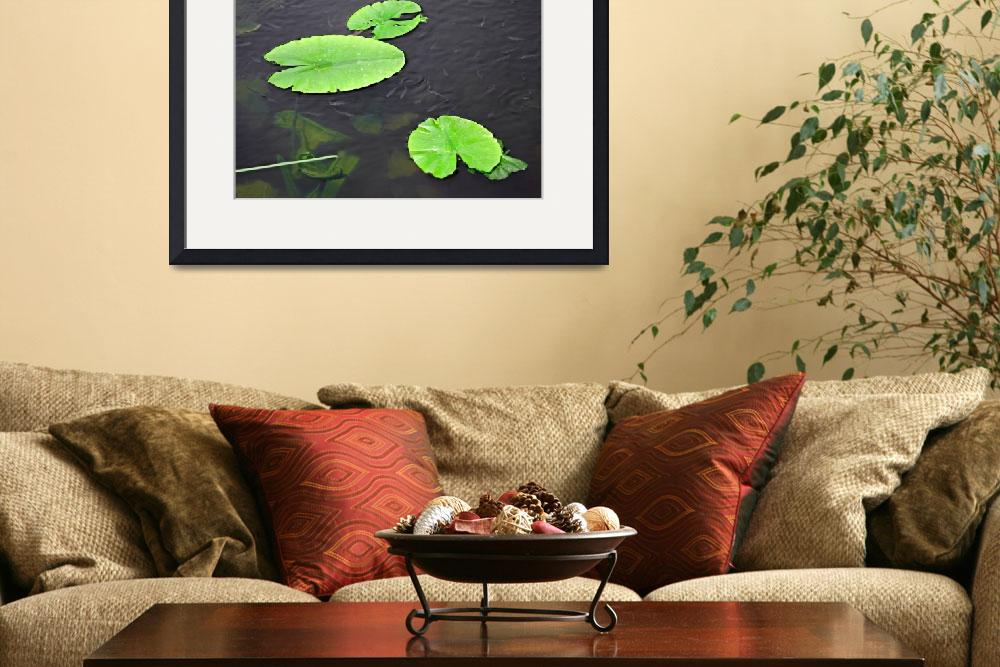 """Baby Fish Swimming Around the Lily Pads (30998-RDA&quot  (2012) by rodjohnson"