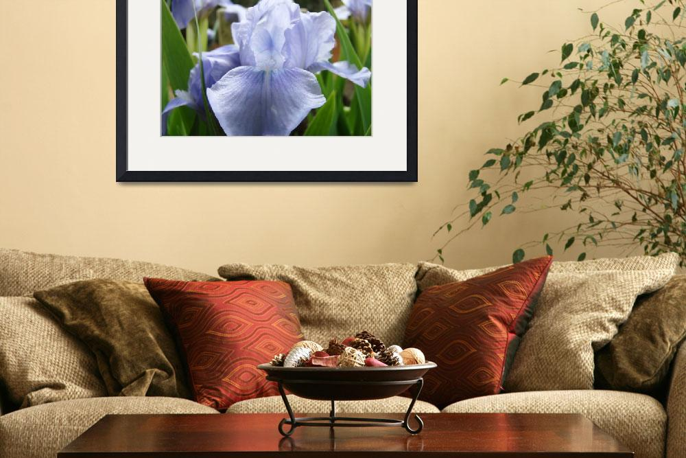 """IRISES Light Blue Iris Flower 5 Spring Irises Artw&quot  (2009) by BasleeTroutman"