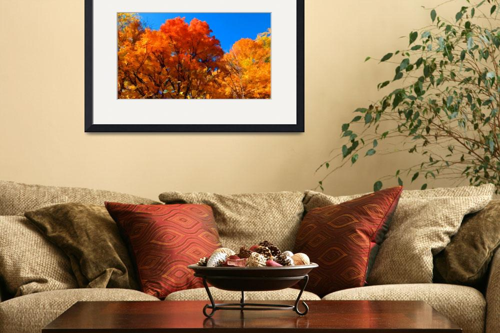 """Peak Fall Autumn Color,Red,Orange,Yellow Leaf Tree&quot  (2010) by Chantal"