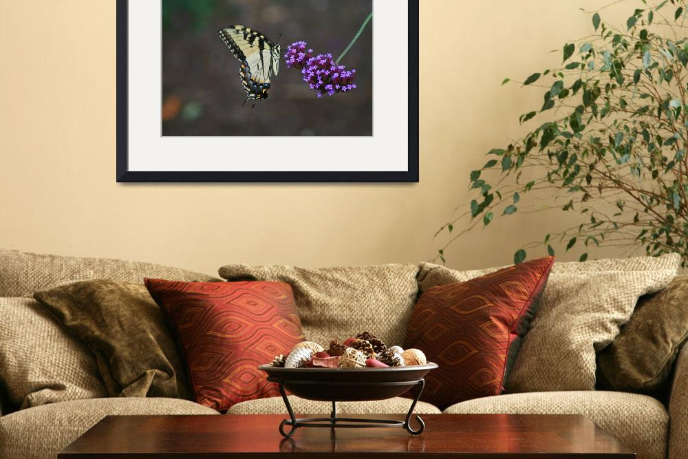 """Butterfly  Eastern Tiger Swallowtail&quot  (2011) by KsWorldArt"
