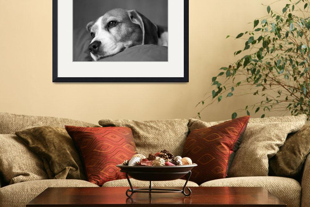 """Relaxing dog&quot  (2012) by danyweb"