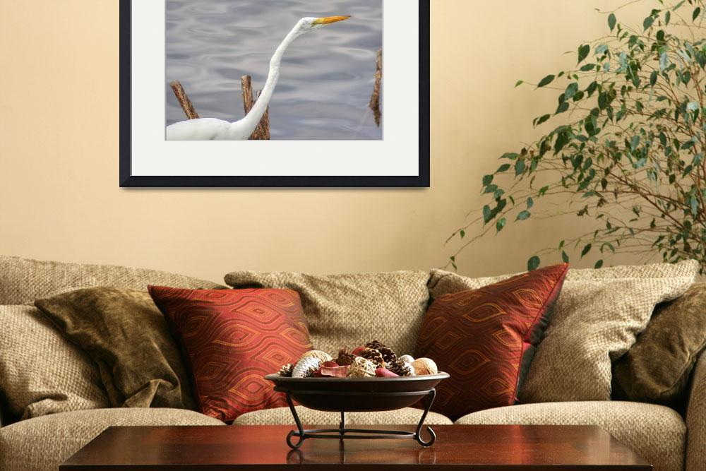 """American Egret #2 (IMG_3224)&quot  (2012) by jvandyke"