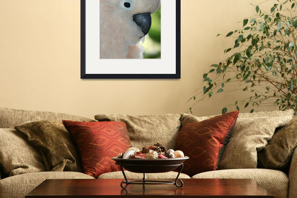 """Salmon Crested Moluccan Cockatoo&quot  (2008) by sharonmau"