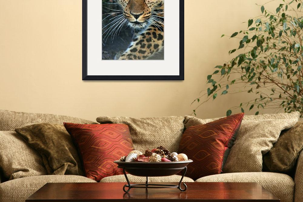 """Amur Leopard&quot  (2007) by loversdream"