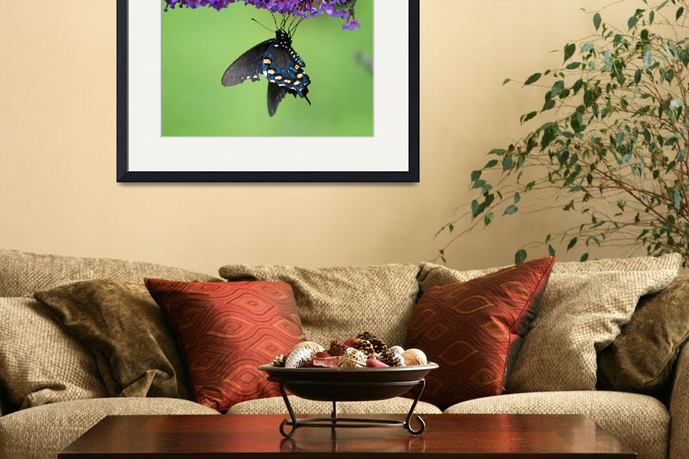 """Butterfly  Pipevine Swallowtail&quot  (2012) by KsWorldArt"