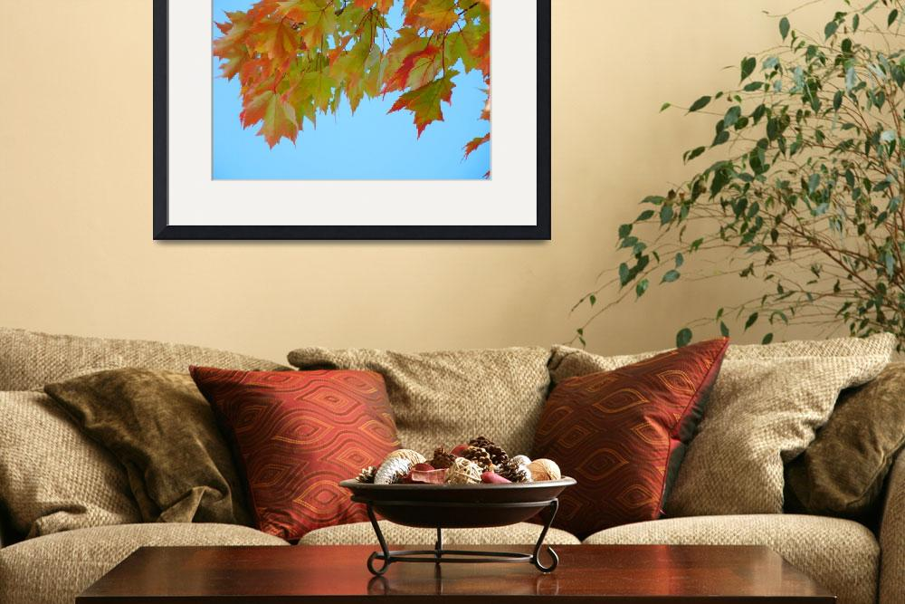 """Fall Leaves Blue Sky&quot  (2010) by BasleeTroutman"