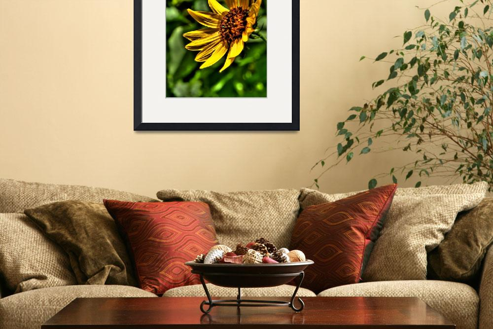 """Black-Eyed Susan&quot  (2009) by NjordPhotography"