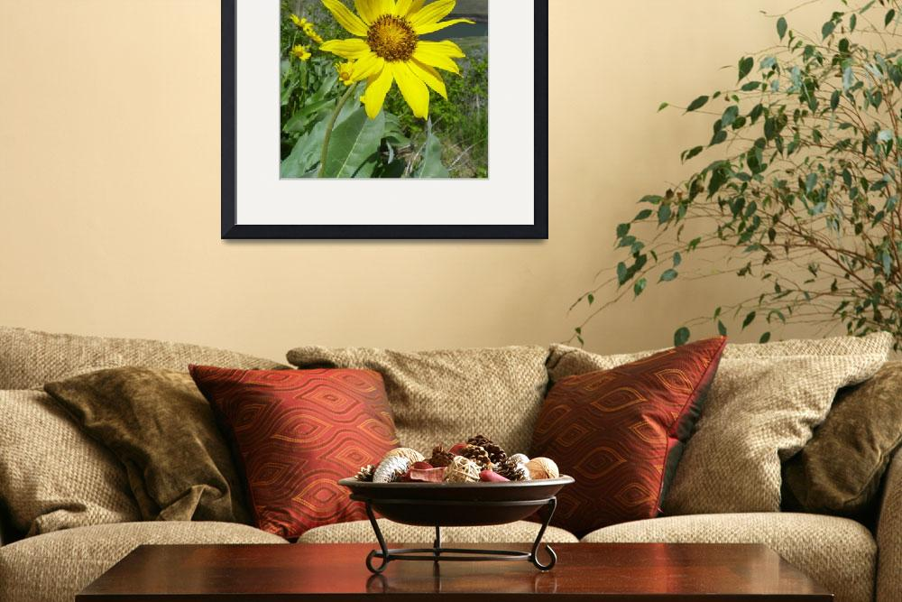 """Botanical - Arrowleaf Balsamroot - Outdoors Floral&quot  by artsandi"