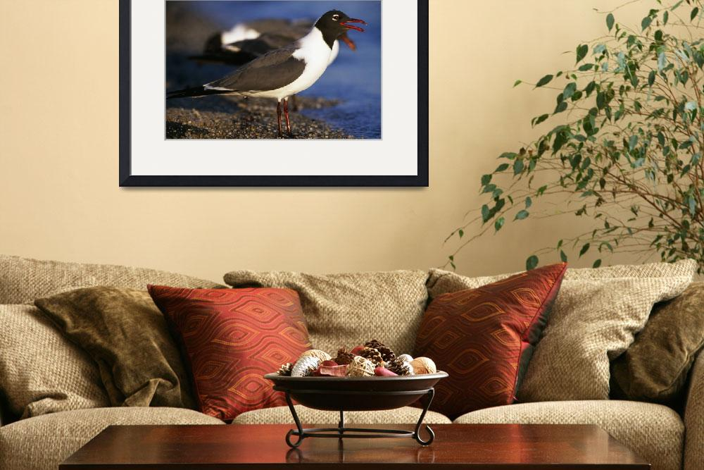 """Laughing Gull Seabird (Larus Atricilla) On Beach&quot  by Panoramic_Images"
