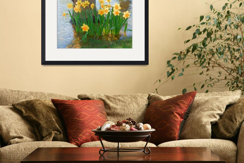 """Large Cupped Daffodil Narcissus&quot  (2012) by vpicks"