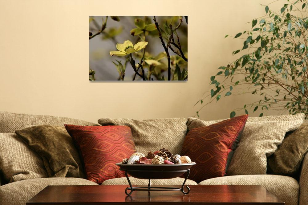 """Dogwood Blossom 7775&quot  (2011) by rayjacque"