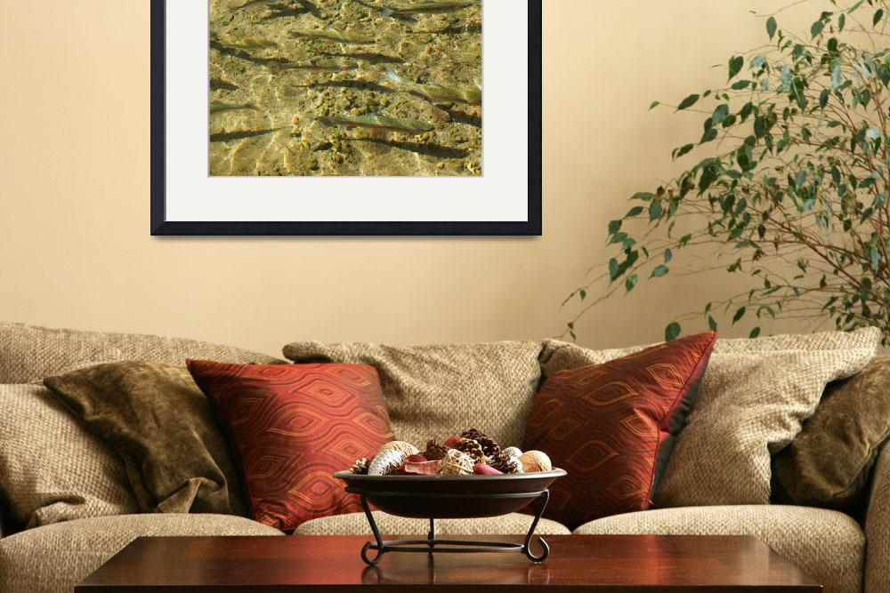 """Creek Rainbow Trout Art Prints Game Sports Fish&quot  (2014) by BasleeTroutman"