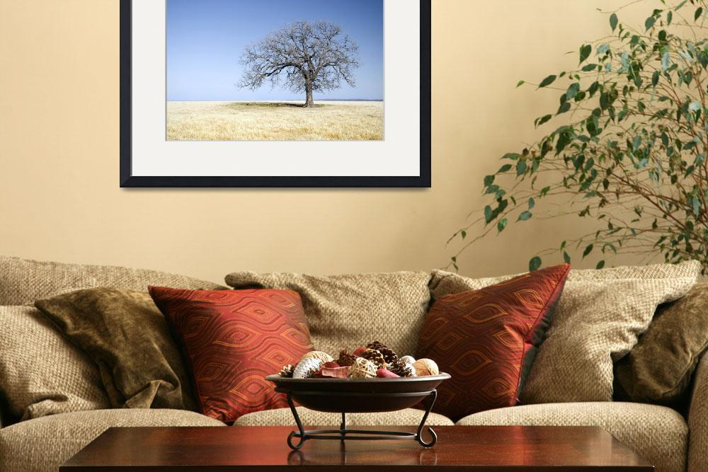 """Lone Tree&quot  (2009) by miir"