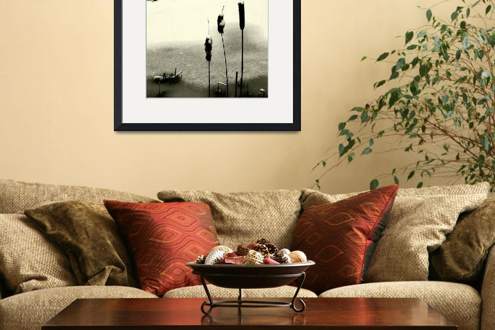 """Cattails&quot  (2007) by bavosiphotoart"