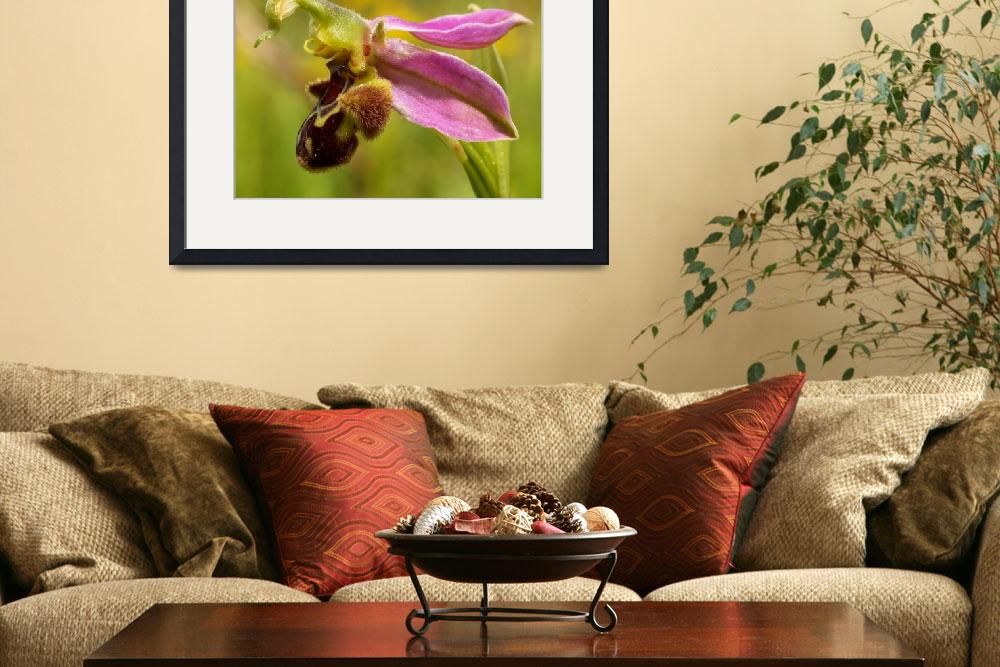 """Bee Orchid&quot  (2008) by roger"