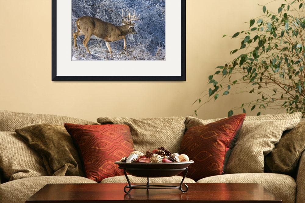 """Trophy Whitetail Deer&quot  by BillKinney"