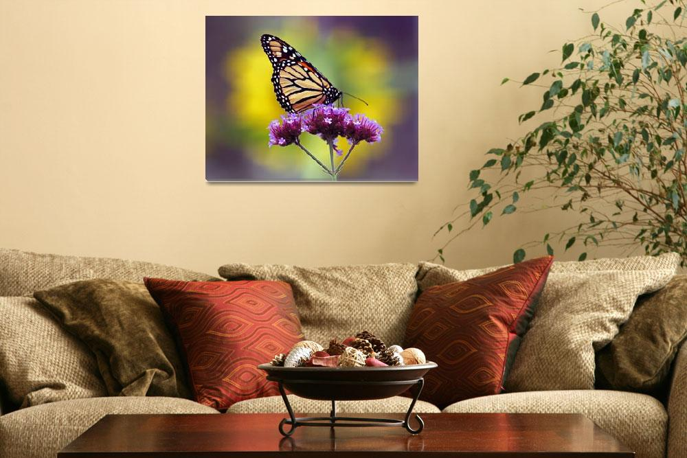 """Butterfly Monarch Lepidoptera&quot  (2011) by KsWorldArt"