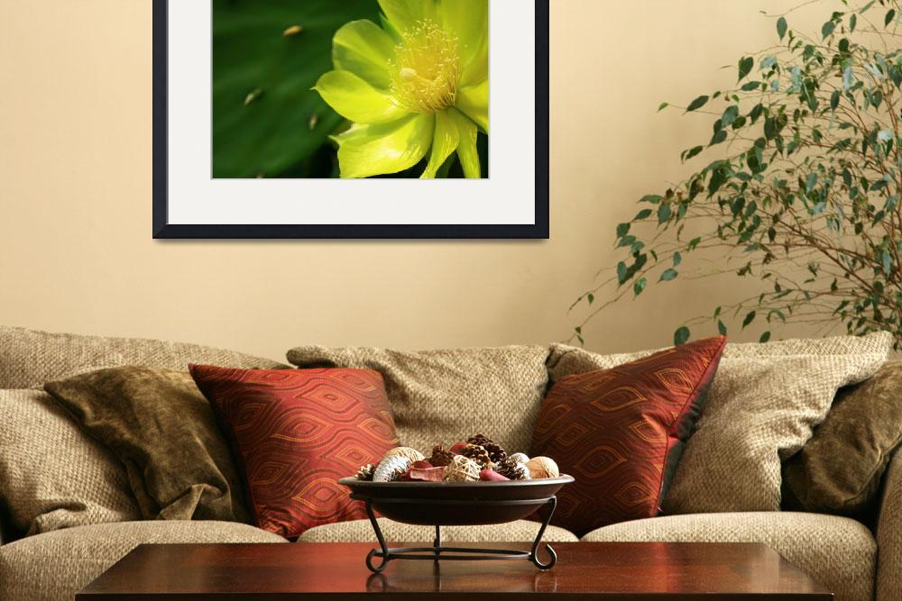 """Exotic Yellow Cactus Blossom&quot  (2012) by newimage"