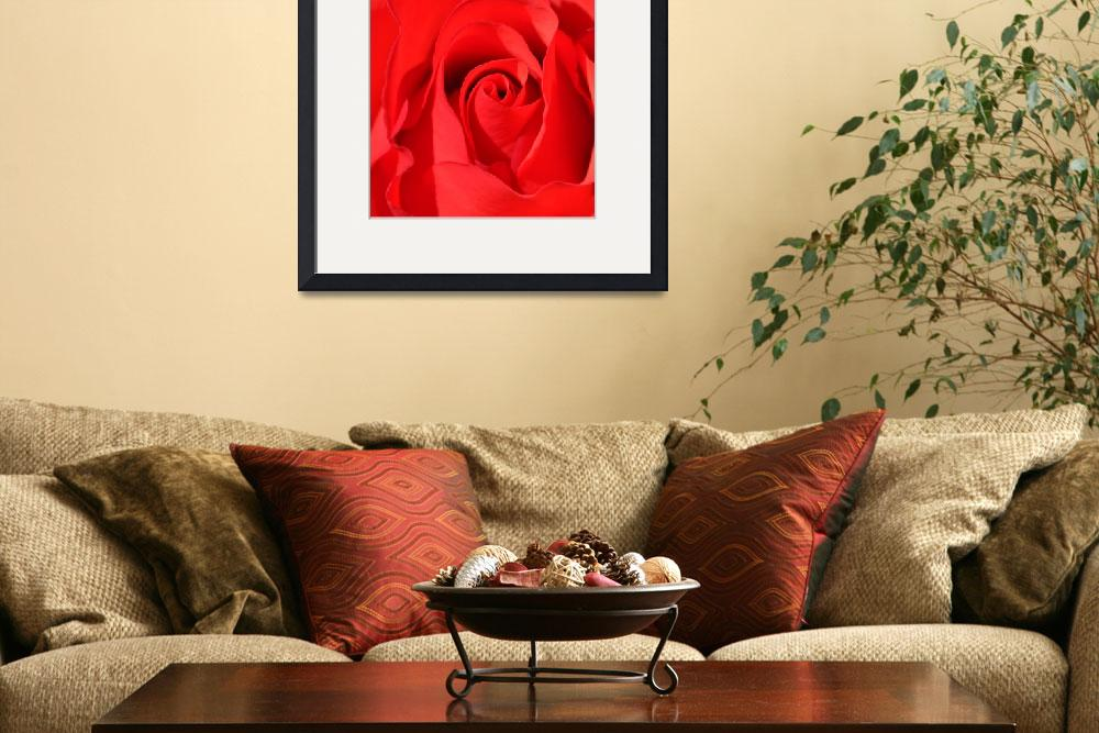 """Red Rose Macro No1&quot  (2011) by evansonart"
